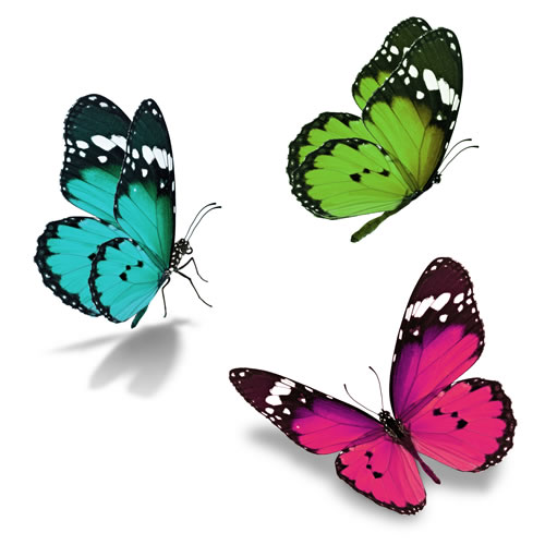 Three colourful butterflies