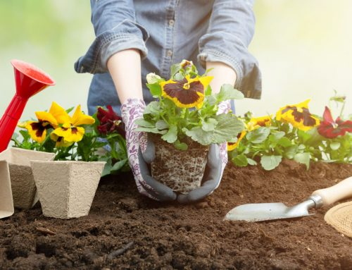 6 Essential Tips for Gardening